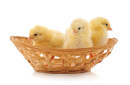 Chickens in the basket isolated on a white background. Standard-Bild - 116057306