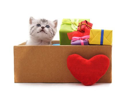 Kitten in a box with the heart and gifts isolated on a white background. Standard-Bild - 116057328