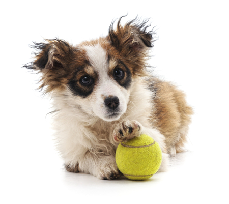 Small puppy with ball isolated on a white background. Standard-Bild - 116057349