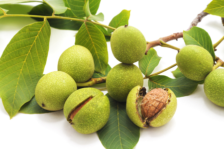 Green walnuts with leaves isolated on a white background. Standard-Bild - 116057354
