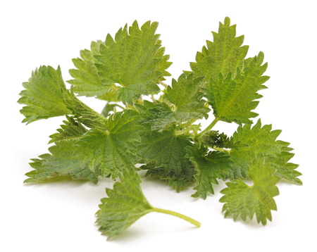 Bush green nettle isolated on a white background. Standard-Bild - 116057393