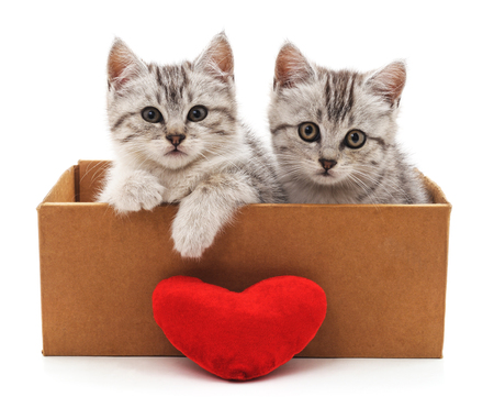 Cats and red heart isolated on a white background. Standard-Bild - 116057396