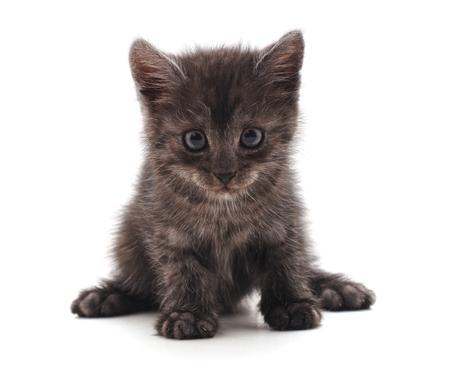 One little kitten isolated on a white background. Standard-Bild - 116057397