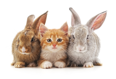 Kitten and rabbits isolated on a white background.