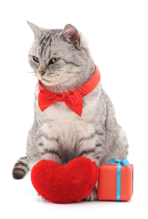 Cat with toy heart isolated on a white background.