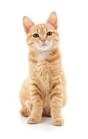 Beautiful cute cat isolated on a white background.
