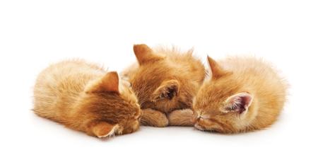 Tre piccoli gattini isolati su sfondo bianco.