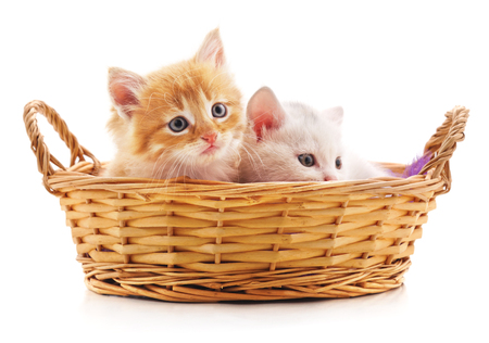 Two red kittens in a basket isolated on a white background.