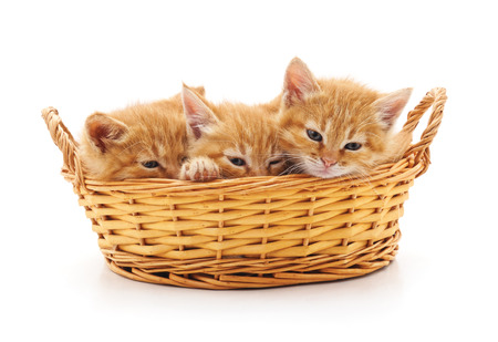 Kittens in a basket isolated on a white background.
