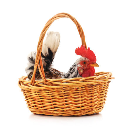 Chicken in a basket with wheat ears on a white background. Standard-Bild - 120478869