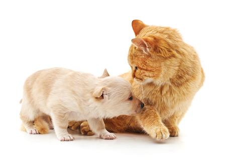 Chat et chien isolé sur fond blanc.
