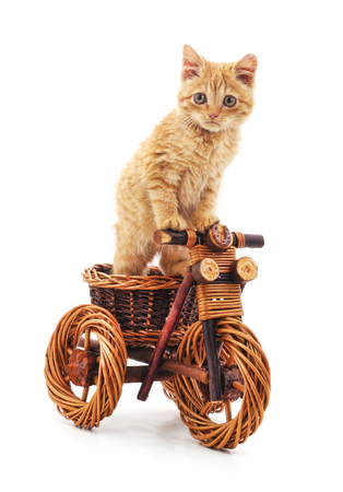 Red kitten on toy bike on a white background.