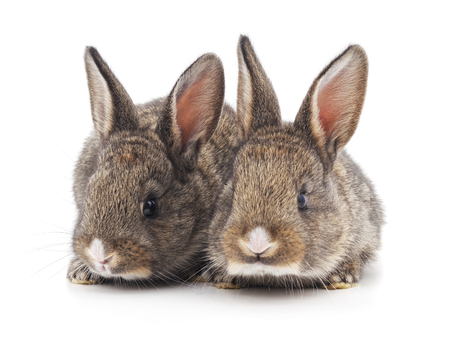 Two beautiful rabbits isolated on a white background. Reklamní fotografie