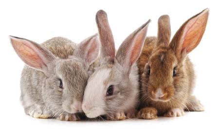 Trois petits lapins isolés sur fond blanc.