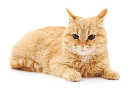 Un gatto spaventato isolato su uno sfondo bianco.