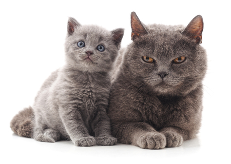Two gray cats isolated on a white background.