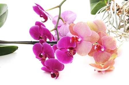 Bouquet of orchids isolated on a white background.