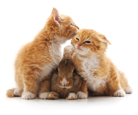 Kittens and rabbit isolated on a white background.