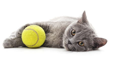 Cat with a tennis ball on a white background. Фото со стока