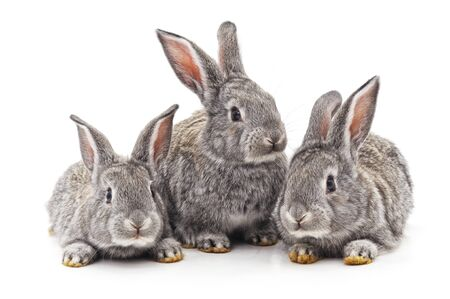Three small rabbits isolated on a white background.