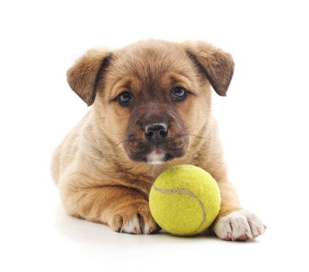Small puppy with ball isolated on a white background. Banque d'images