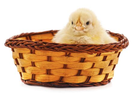 Chicken in a basket isolated on a white background.