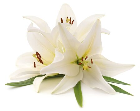 Bouquet of white lilies isolated on a white background.