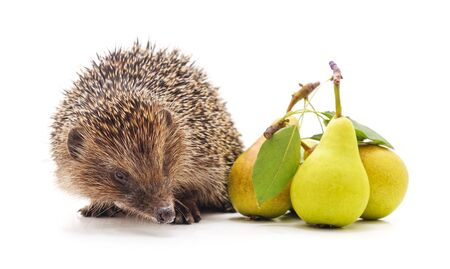 Hedgehog with pears isolated on a white background.