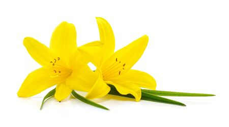 Bouquet of yellow lilies isolated on a white background.
