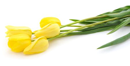 Five yellow tulips isolated on a white background.