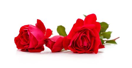 Bouquet red roses isolated on a white background. Imagens - 129077725