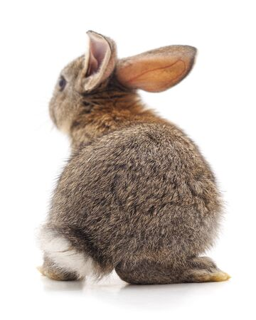 The back of a brown rabbit isolated on a white background.