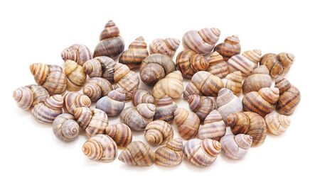 Collection of river shell on a white background.