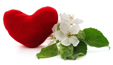 Apple blossom and heart isolated on a white background.