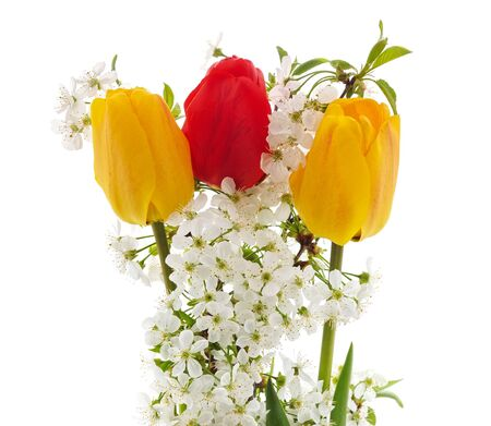 Bouquet of tulips and cherry flowers isolated on a white background. Imagens