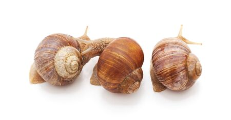 Snails turned their backs isolated on a white background.
