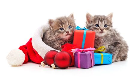 Cats in the hat Santa with Christmas gifts on a white background. Stock Photo