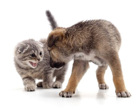 Kitten that screams at puppy isolated on white background. 版權商用圖片