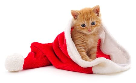 Kitten in Christmas hat isolated on a white background. Stock Photo