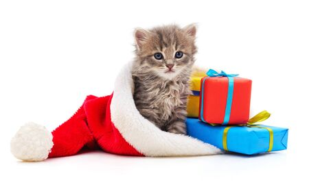 Kitten in the hat Santa isolated on a white background.