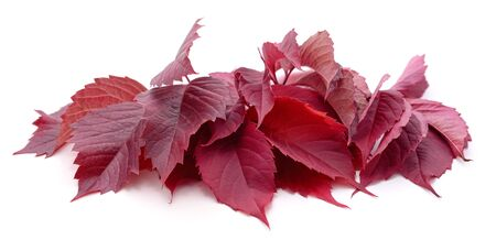 Bunch of red leaves isolated on a white background.