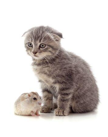 Kätzchen und Hamster isoliert auf weißem Hintergrund. Standard-Bild