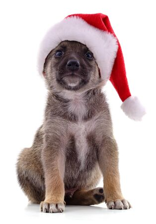 Dog in Christmas hat isolated on a white background.
