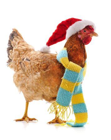 Poulet dans un chapeau de Noël isolé sur fond blanc. Banque d'images