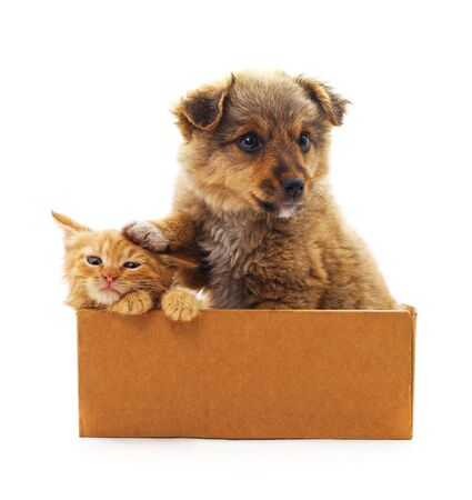 Kitten and puppy in a box on a white background.