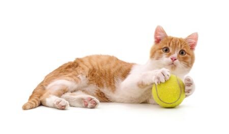 Cat with a tennis ball on a white background.