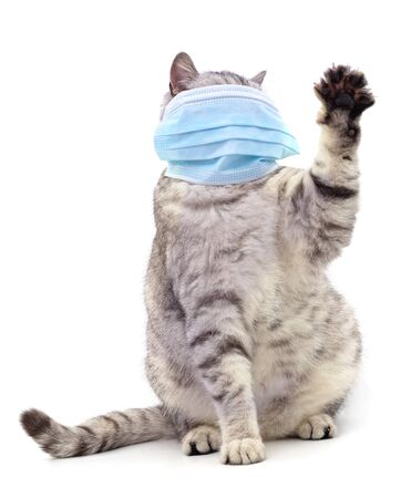 Cat in medical mask isolated on white background. Banco de Imagens
