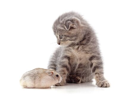 Kitten and hamster isolated on a white background. Archivio Fotografico