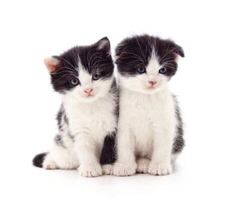 Two small kittens isolated on a white background. Banque d'images