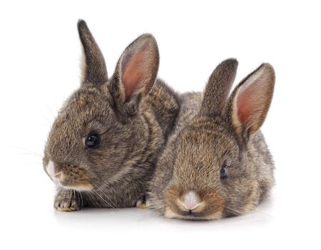 Two beautiful rabbits isolated on a white background. 版權商用圖片